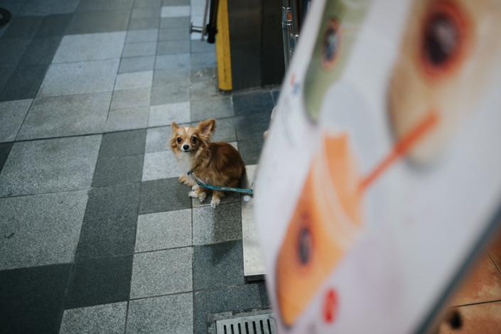 nishiki market shrine kyoto