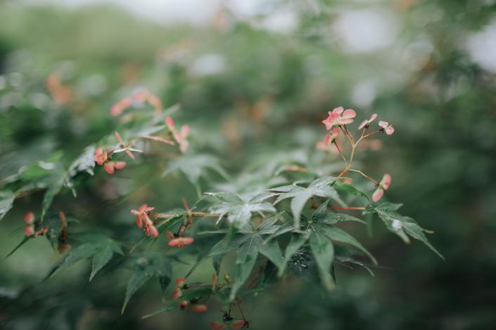 plants at kiyomizu dera